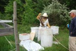 Donna getting ready to knock the bees into a bucket